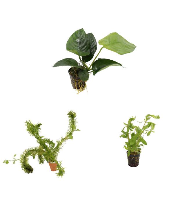 3 grüne Wasserpflanzen