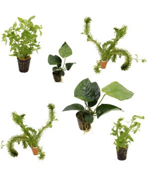 6 grüne Wasserpflanzen