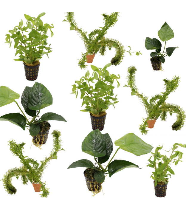 9 grüne Wasserpflanzen