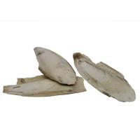 Sepia-Schale 100g