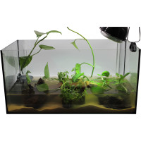 """Standard Aquarium Set 60cm """"Baby"""" inkl. Aquarium"""
